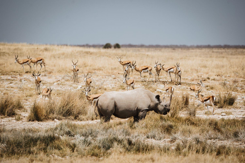 Фотообои «Носороги 22»