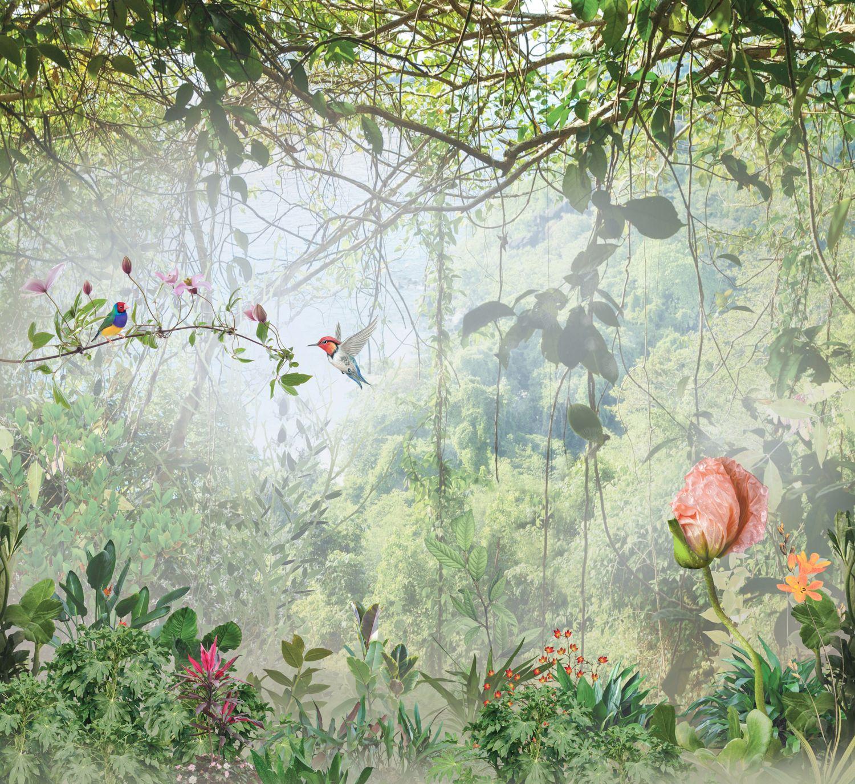 Фотообои «Райские джунгли»