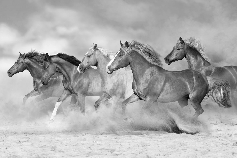 Фрески «Лошади в серых товах»