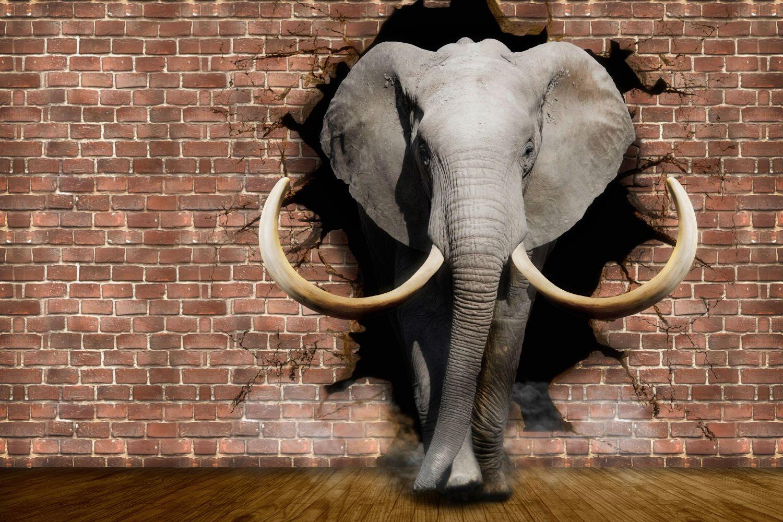Фотообои «Слон кирпичная стена»
