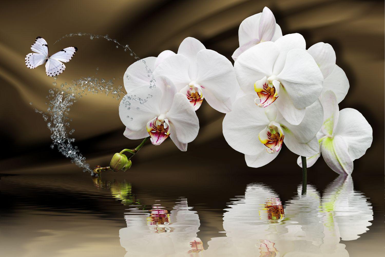 Фотообои «Орхидеи и бабочка»
