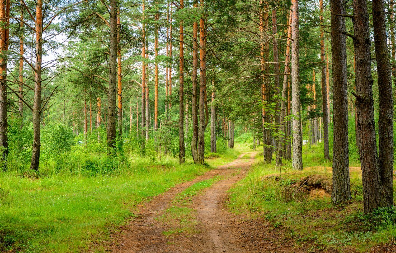 Фрески «Сосновый лес»