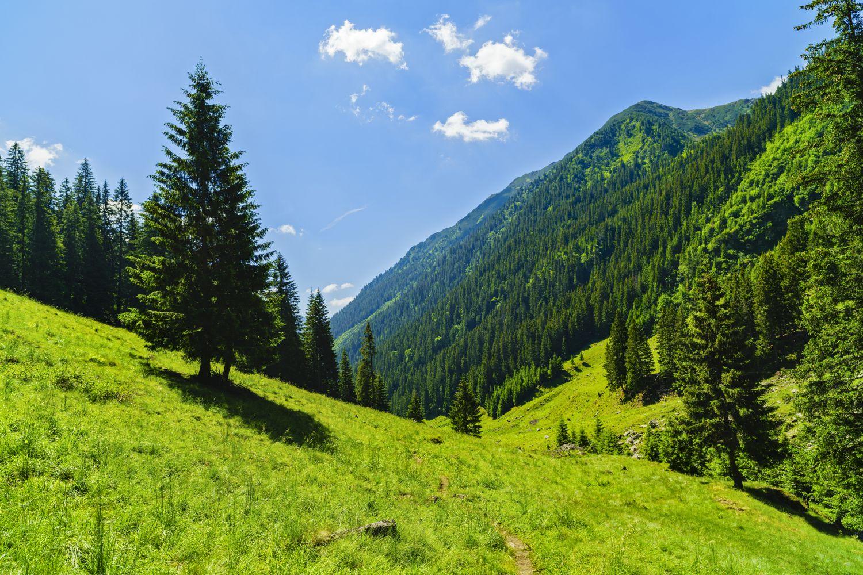 Фотообои «Альпийская поляна»