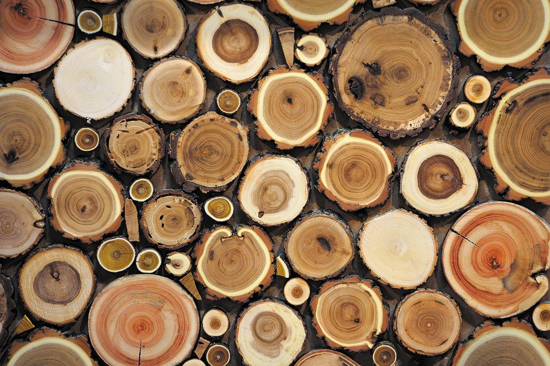 Фрески «Кольца деревьев»