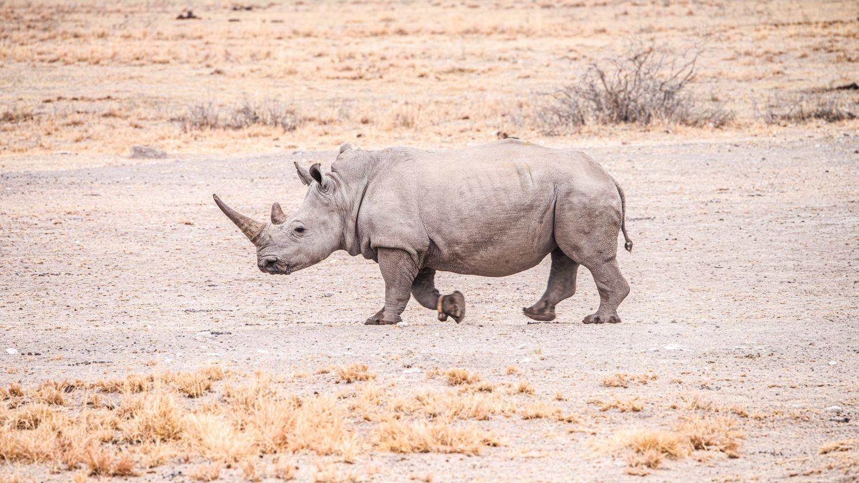 Фотообои «Носороги 24»