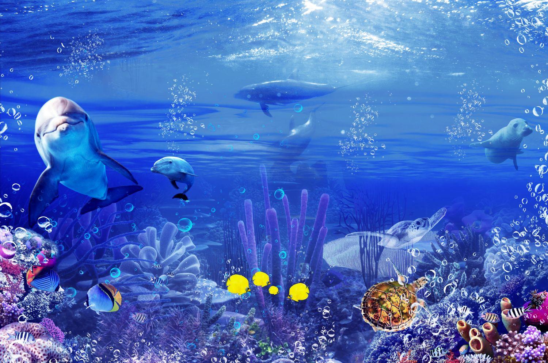 Фотообои «Дельфины и подводный мир»