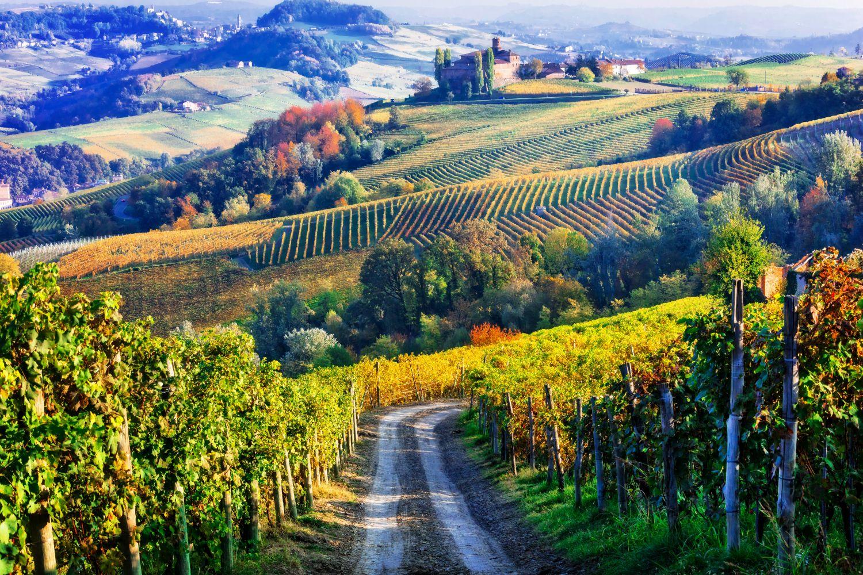 Фотообои «Виноградники осенью»