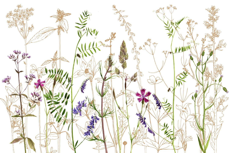 Фотообои «Полевые цветы 4»