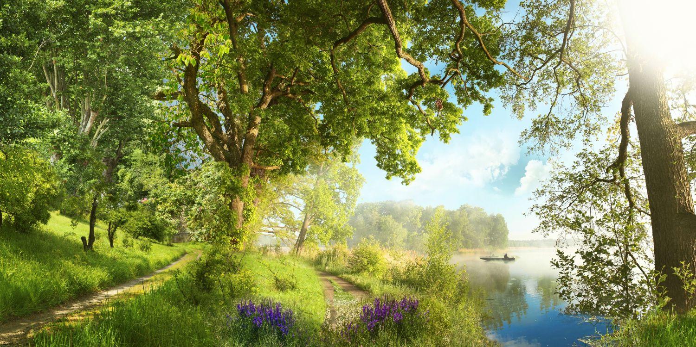Фотообои «Деревья у пруда»