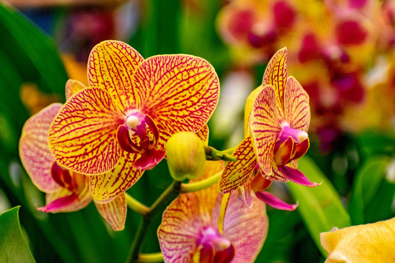 Фотообои «Орхидеи 8»