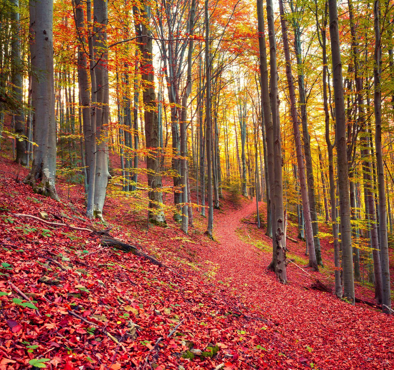 Фотообои «Деревья осенью»