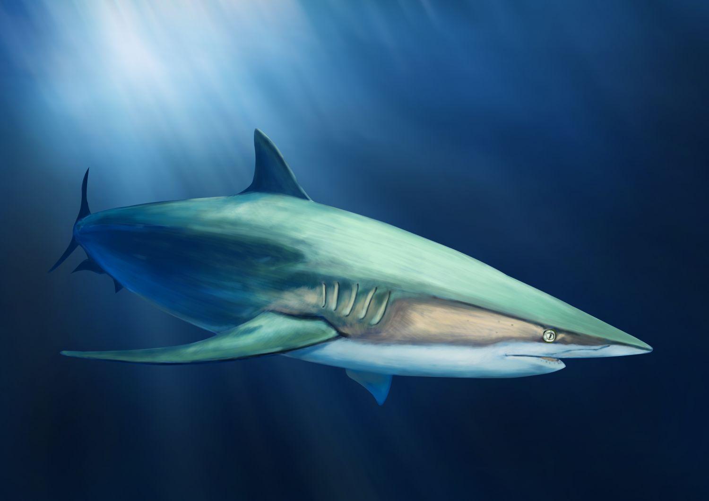 Фотообои «Акулы 24»