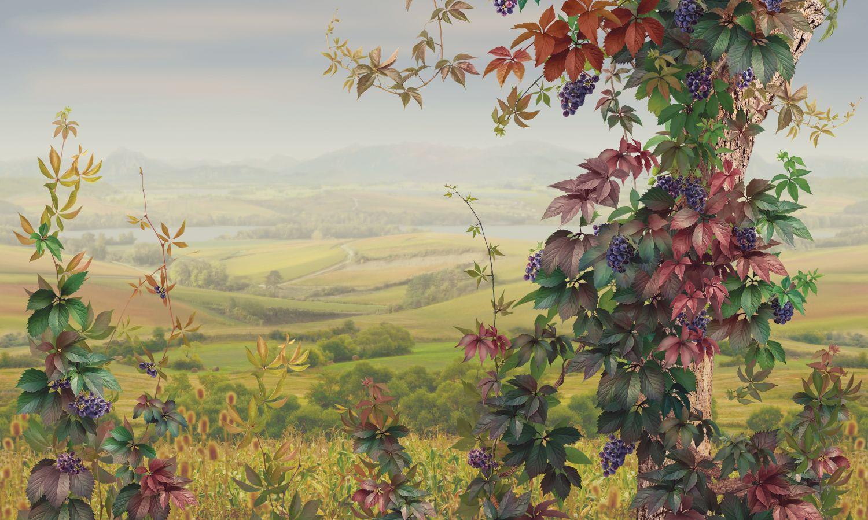 Фотообои «Виноградная долина»