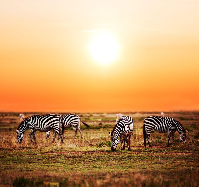 Фрески «Зебры 2»