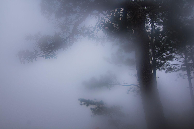 Фотообои «Туман и сосна»