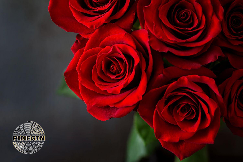 Фотообои «Розы красные»