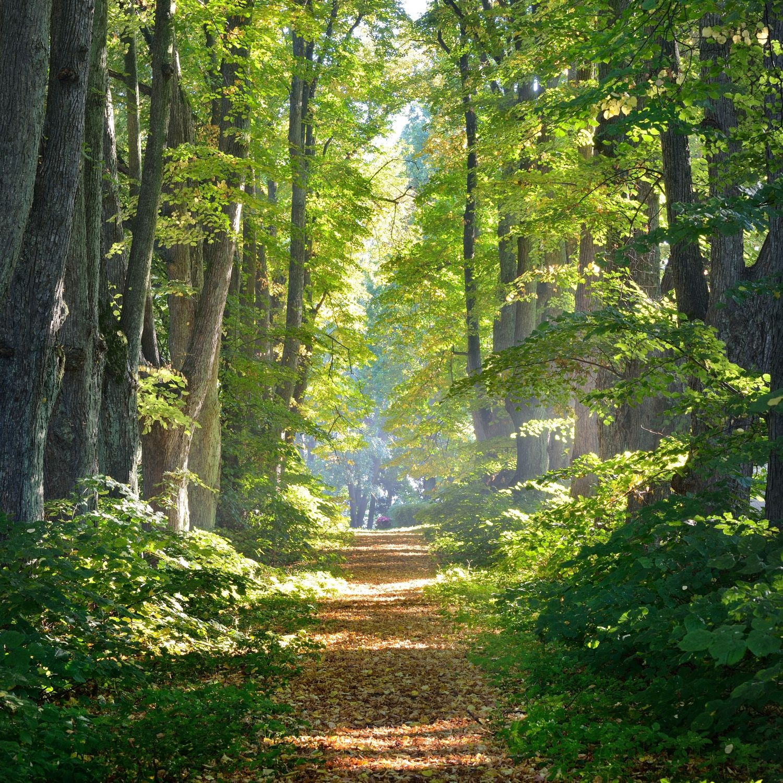 Фотообои «Дорога в лесу»