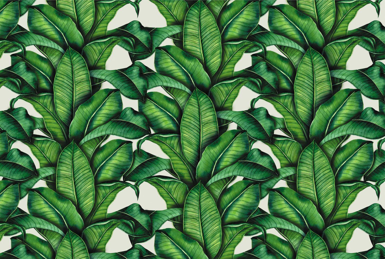 Фотообои «Темно-зеленые листья»