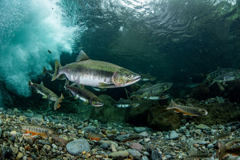 Фотообои «Рыбки на дне»