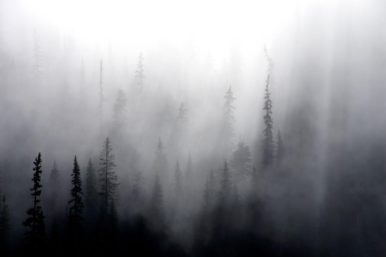 Фотообои «Сказочная туманная тайга»