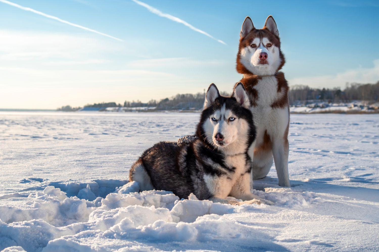 Фрески «Собаки 11»