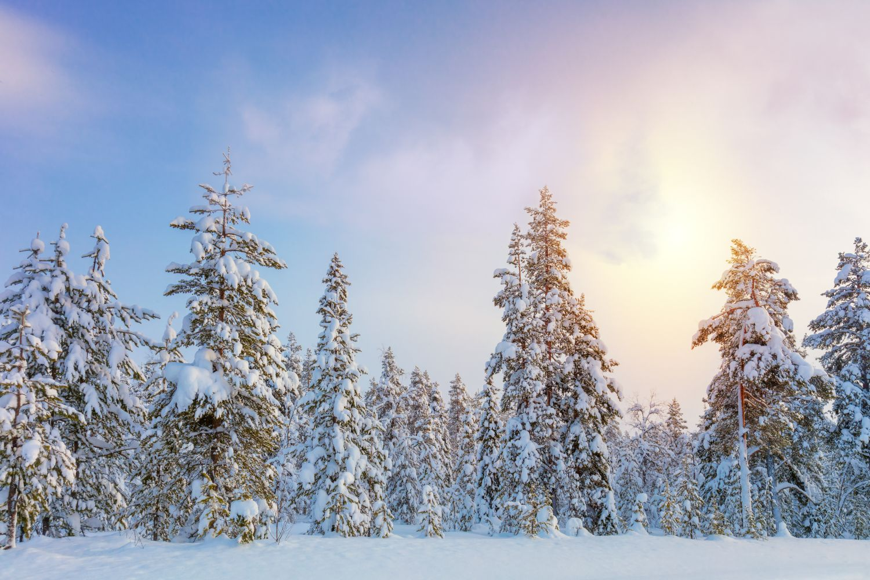 Фотообои «Сказочная зимняя тайга»