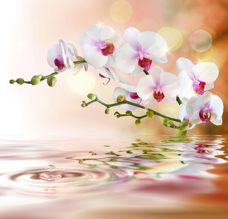 Фотообои «Орхидеи 1»