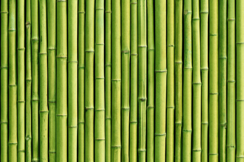 Фотообои «Бамбук 6»