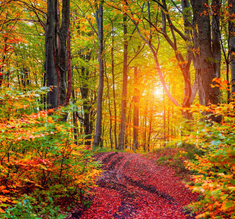 Фотообои «Осенняя сказка в лесу»