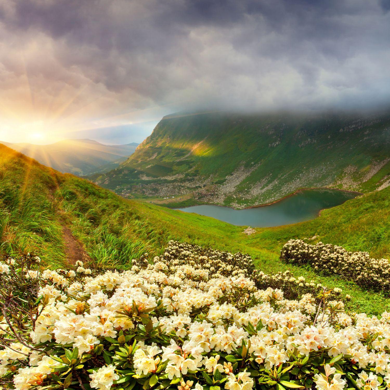 Фотообои «Альпийские луга»