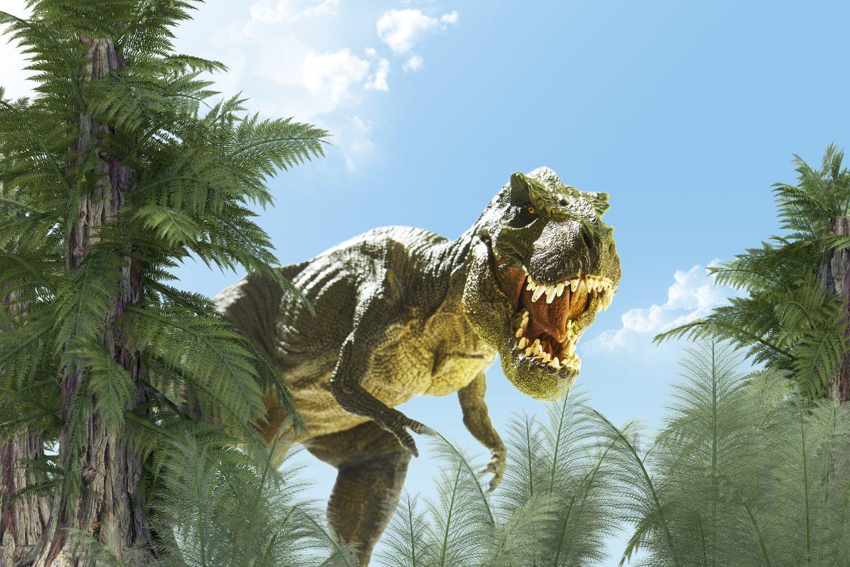 Фотообои «Хищный динозавр Тираннозавр»