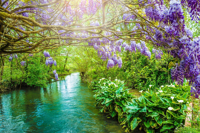Фотообои «Фиолетовая глициния»