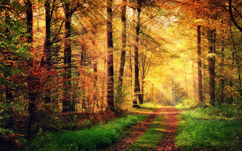 Фотообои «Осень в лесу»