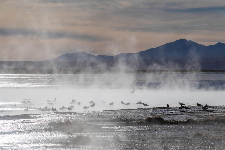 Фотообои «Птицы природа»
