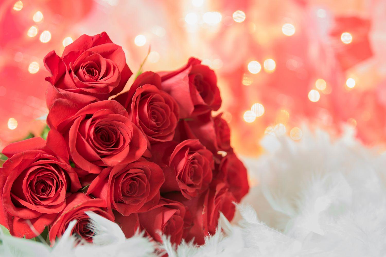 Фотообои «Красные розы 7»