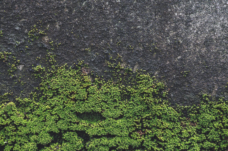 Фотообои «Мох на стене»
