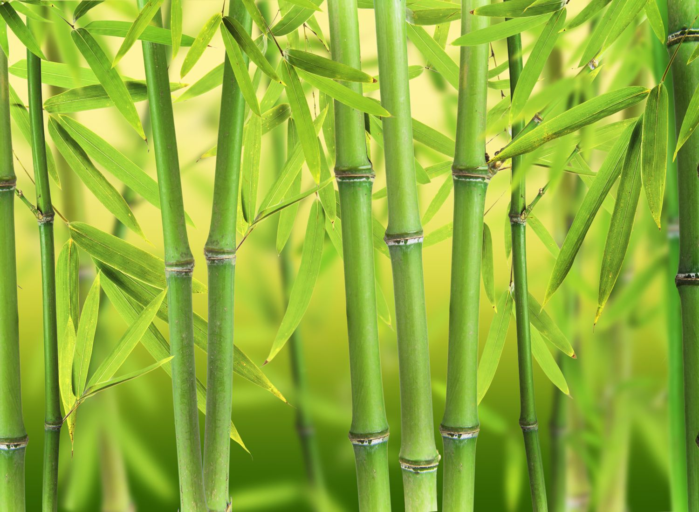 Фотообои «Бамбук 3»