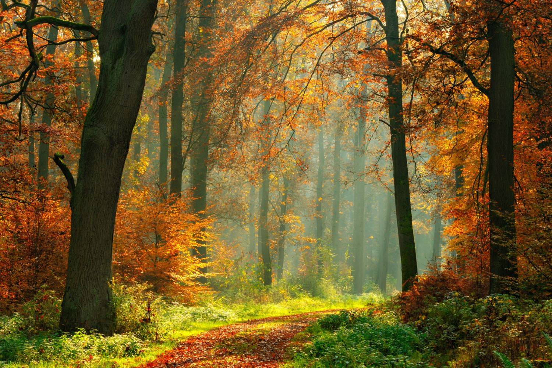 Фотообои «Наступила осень в лесу»