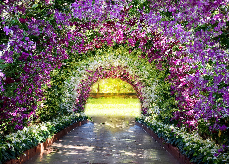 Фотообои «Цветочная арка»
