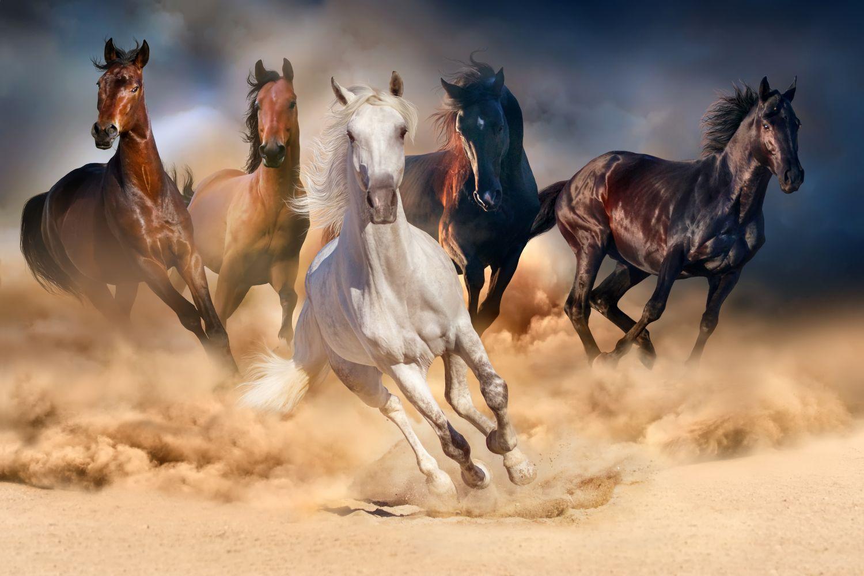 Фотообои «Резвые лошади»