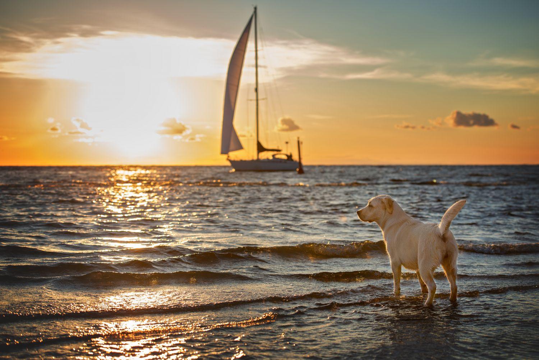 Фотообои «Собаки 21»