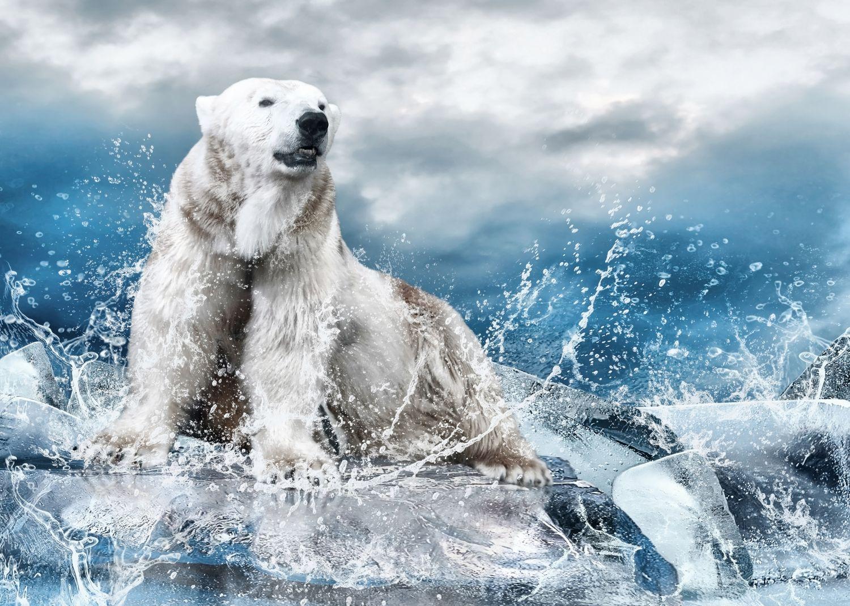 Фотообои «Белый медведь»