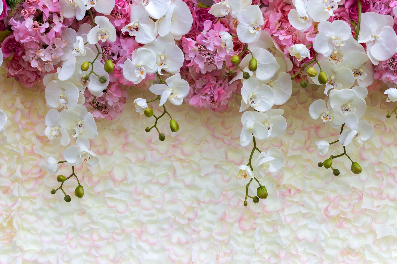 Фотообои «Красивые орхидеи»