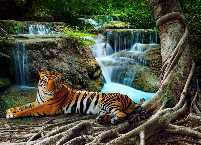 Фотообои «Тигр и водопад»