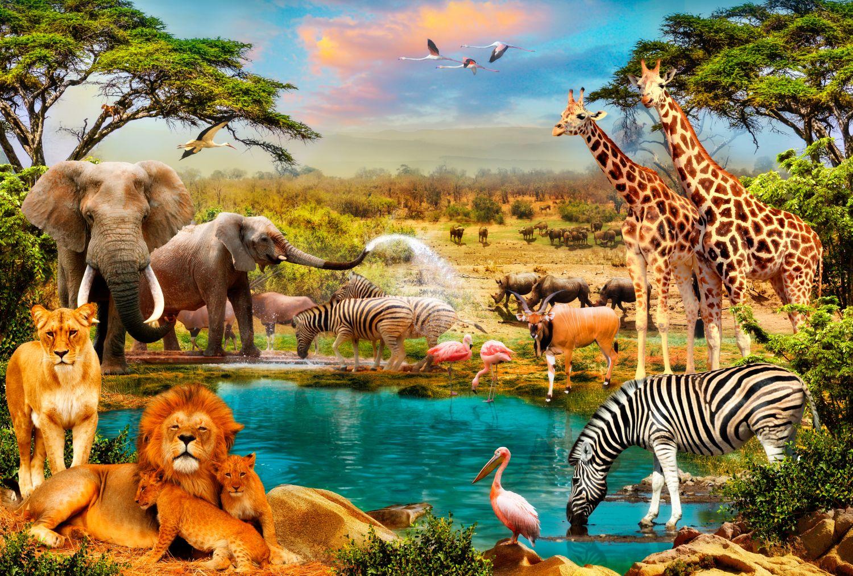 Фотообои «Африканское сафари»