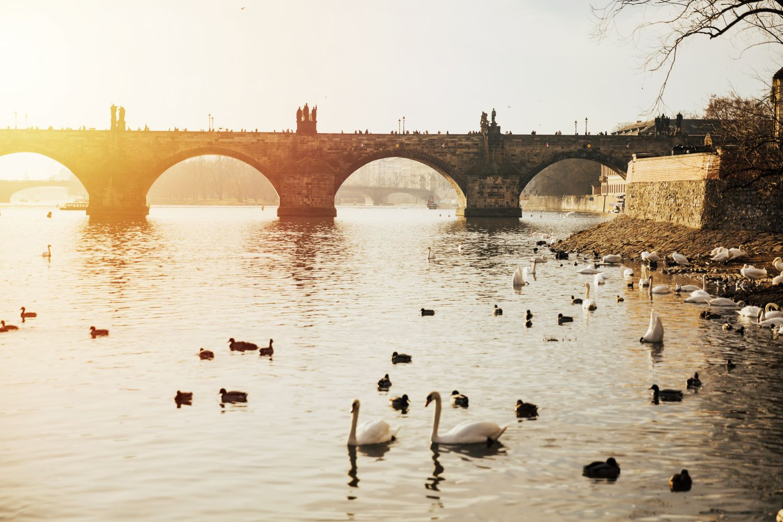 Фотообои «Лебеди 18»