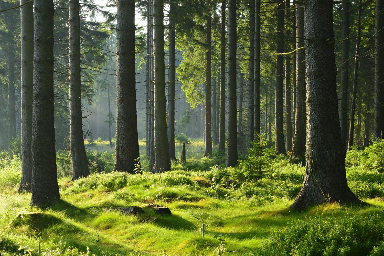 Фотообои «Поляна в лесу»