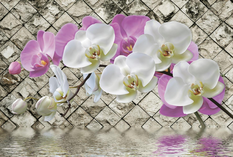Фотообои «Веточка орхидеи»