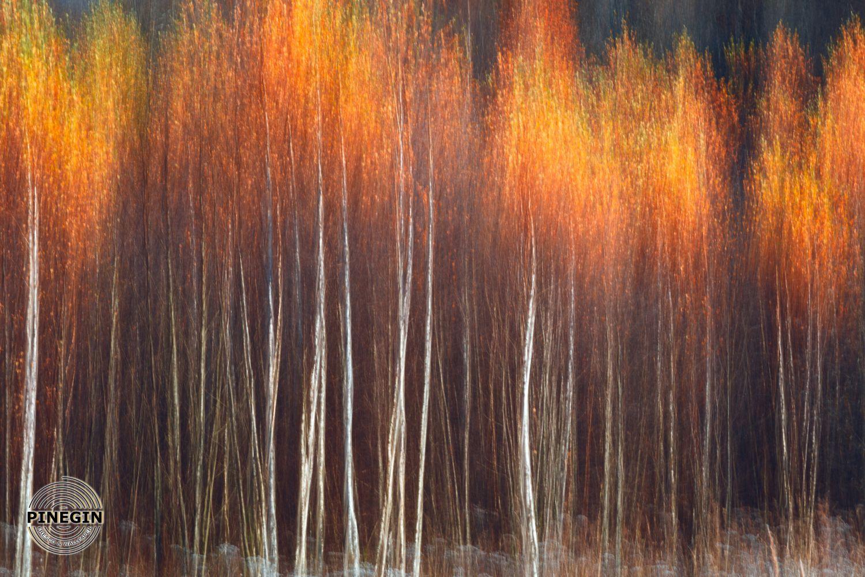 Фотообои «Абстракция леса»