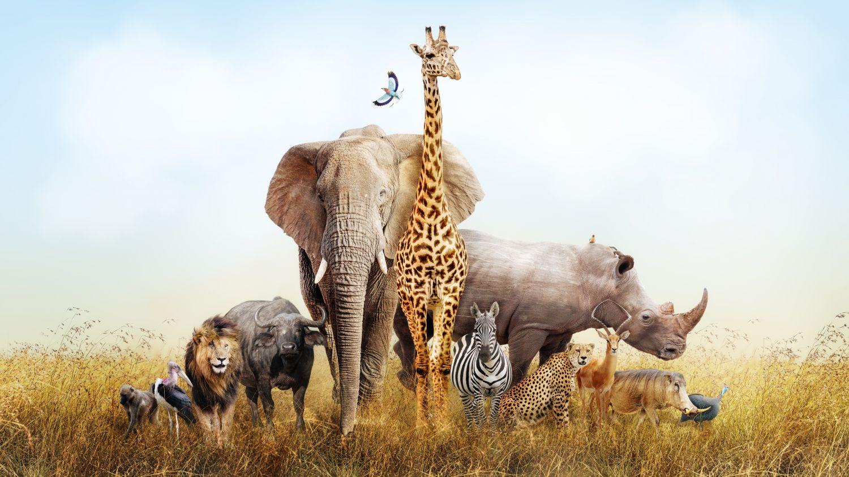 Фотообои «Африка 9»
